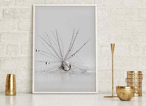 Prints - Spider